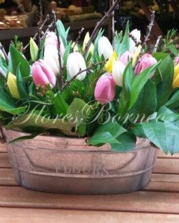 145-a-centro-de-flores-en-palma-de-mallorca-tulipanes
